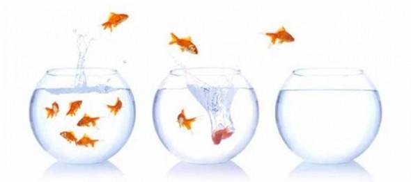 Cultiver l'instinct de raisonner