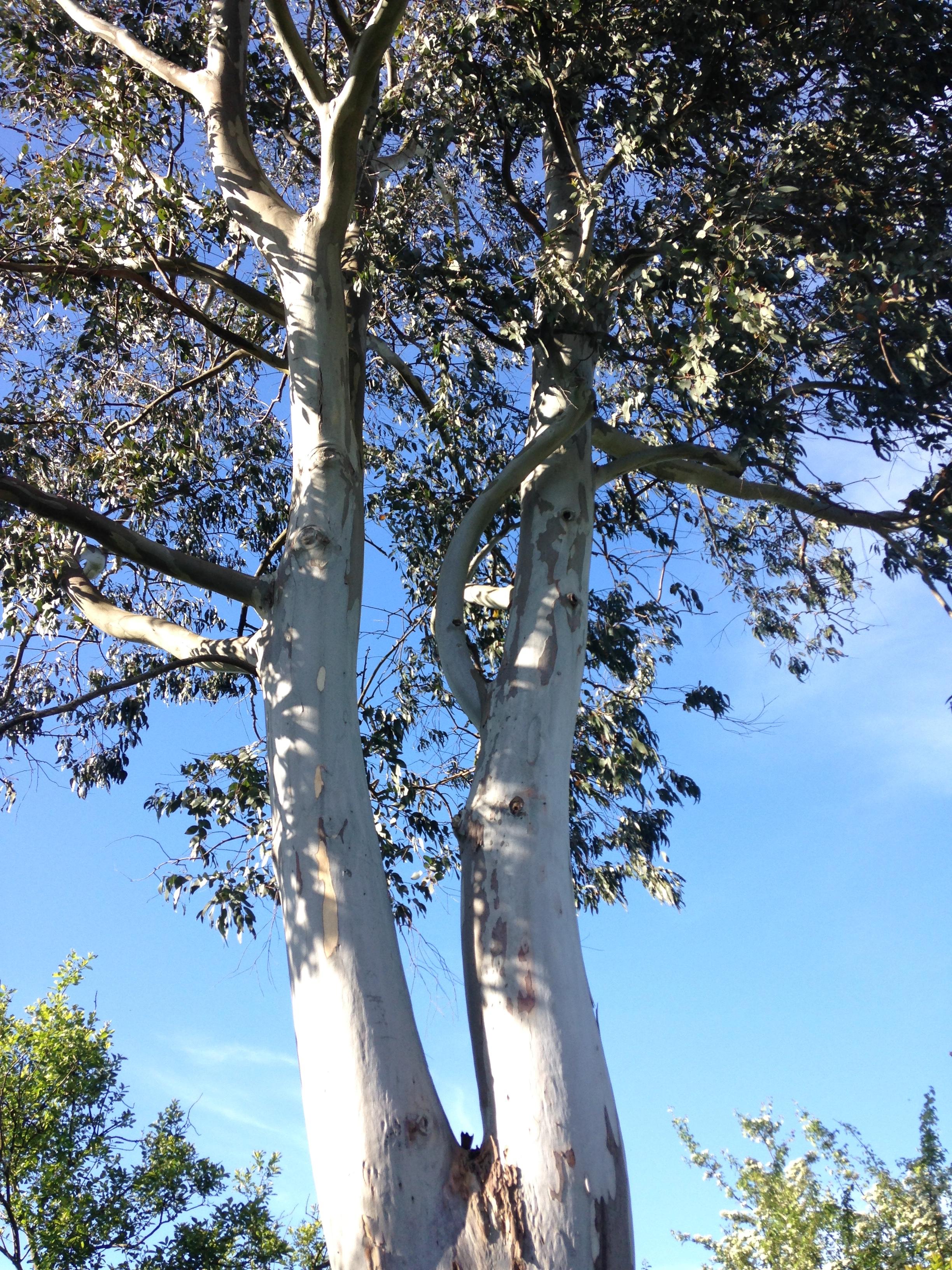 La forêt qui cache l'arbre